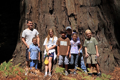 2008-08-12_Redwoods_014