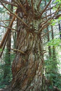 2008-08-12_Redwoods_003