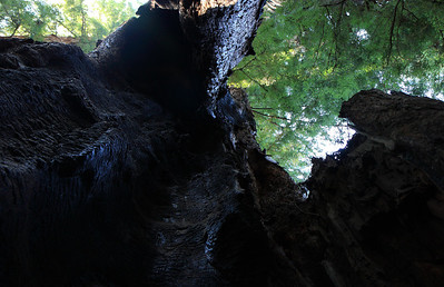 2008-08-13_Redwoods_031