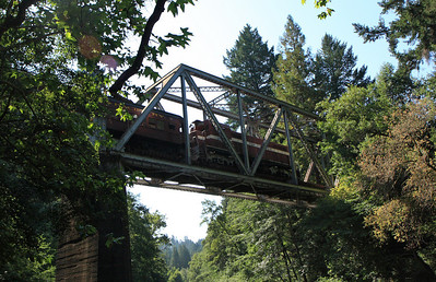 2008-08-13_Redwoods_039