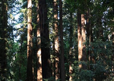 2008-08-13_Redwoods_025