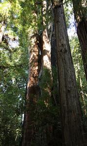 2008-08-13_Redwoods_027
