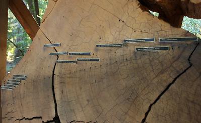 2008-08-13_Redwoods_007