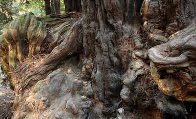 2008-08-13_Redwoods_011