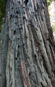 2008-08-13_Redwoods_022