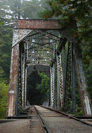 2008-0814 Redwoods 3