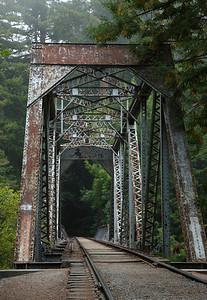 2008-08-14_Redwoods_019