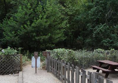 2008-08-14_Redwoods_011