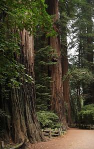 2008-08-14_Redwoods_045