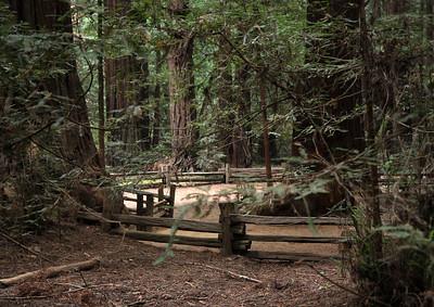 2008-08-14_Redwoods_043