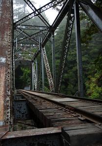 2008-08-14_Redwoods_020