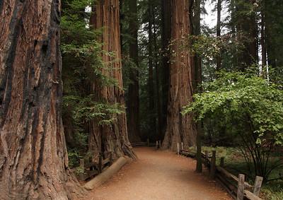 2008-08-14_Redwoods_047