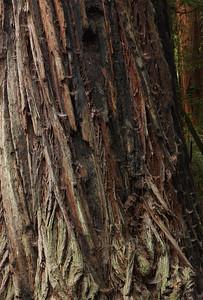 2008-08-14_Redwoods_053