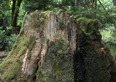 2008-08-14_Redwoods_013