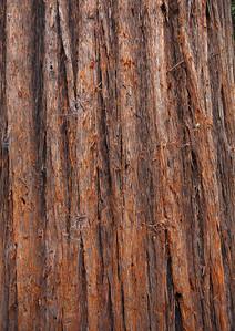 2008-08-14_Redwoods_037