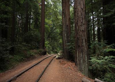 2008-08-14_Redwoods_040