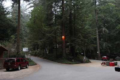2008-08-14_Redwoods_007