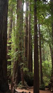2008-08-14_Redwoods_050