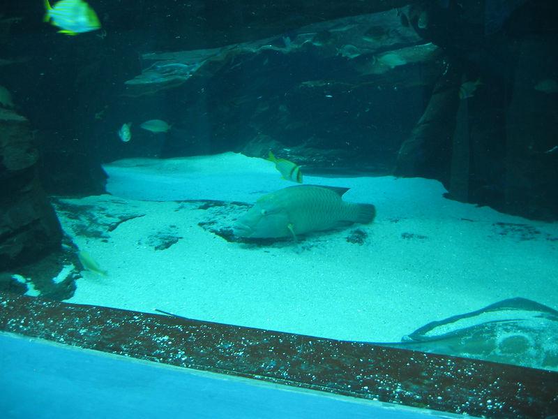 2006-03-01 26-georgia-aquarium-25