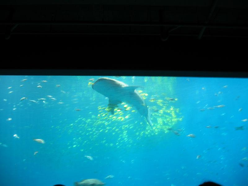 2006-03-01 30-georgia-aquarium-29