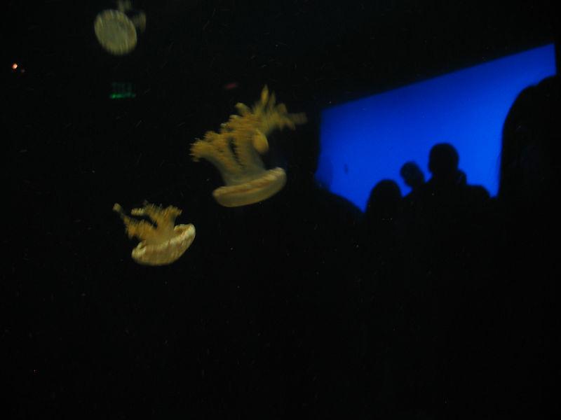 2006-03-01 34-georgia-aquarium-33