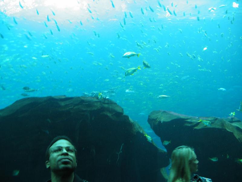 2006-03-01 25-georgia-aquarium-24
