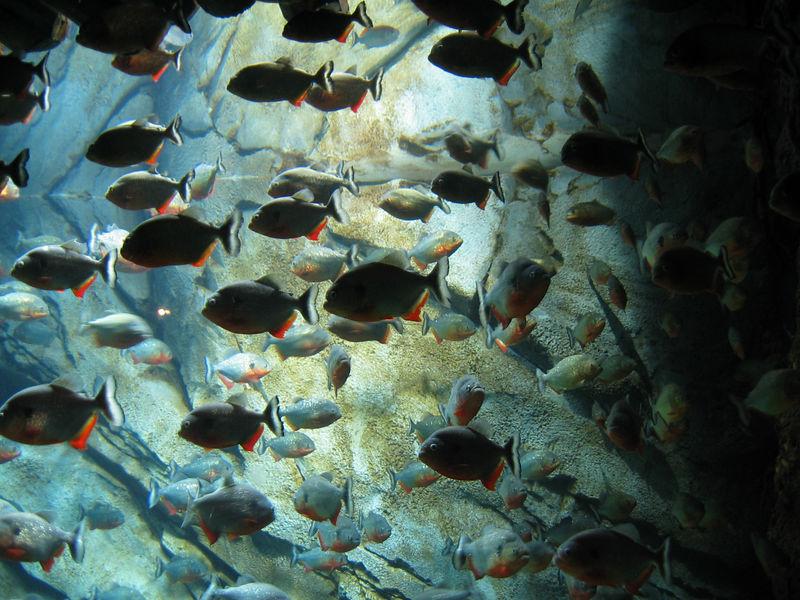 2006-03-01 51-georgia-aquarium-50