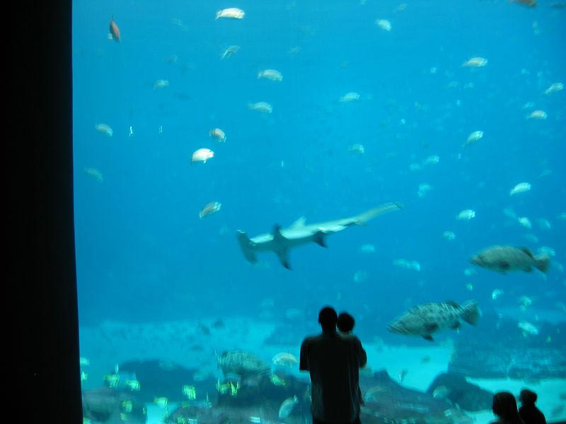 2006-03-01 33-georgia-aquarium-32