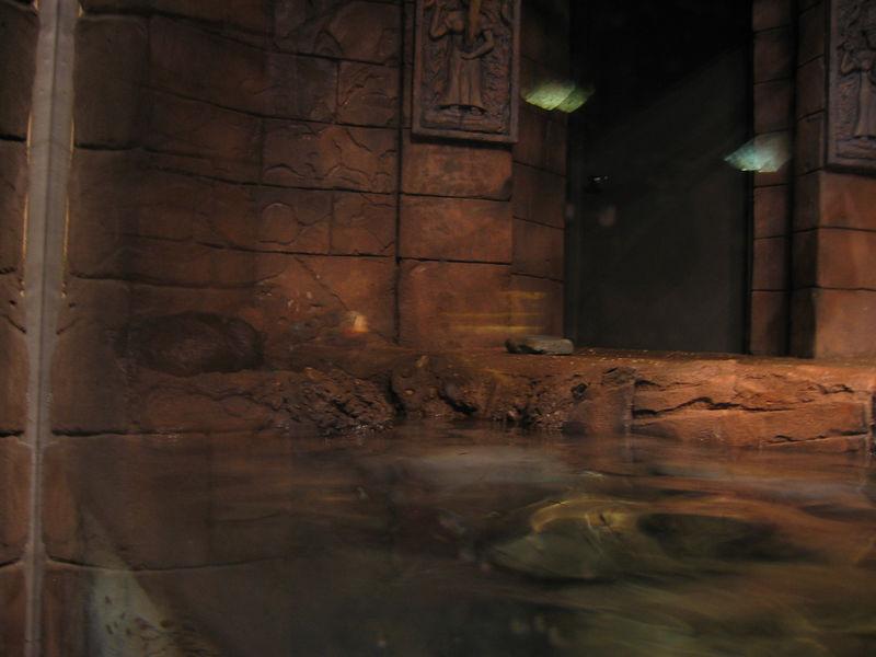 2006-03-01 57-georgia-aquarium-56