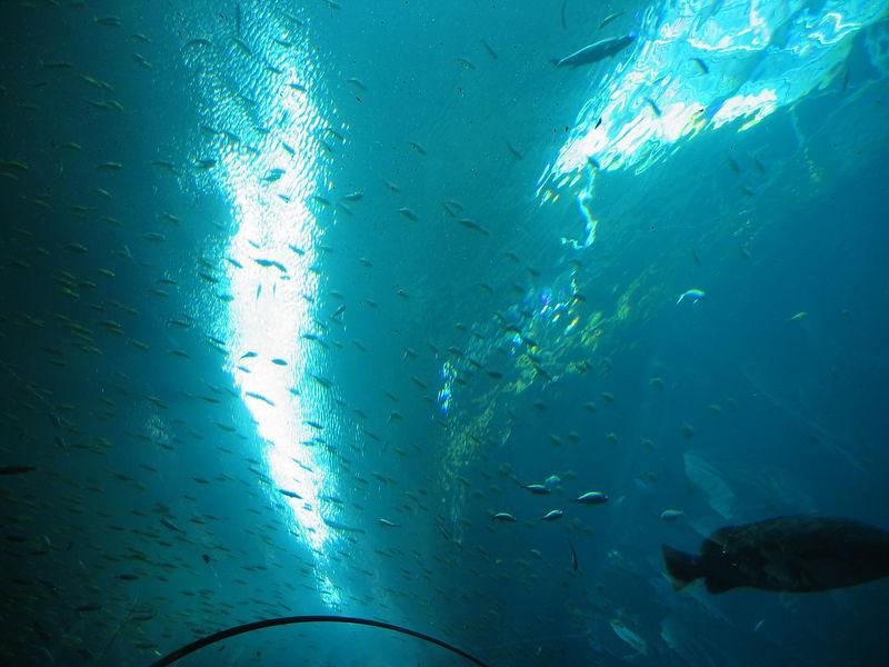 2006-03-01 24-georgia-aquarium-23