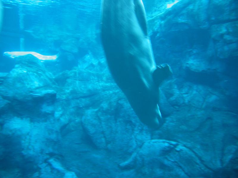 2006-03-01 10-georgia-aquarium-09