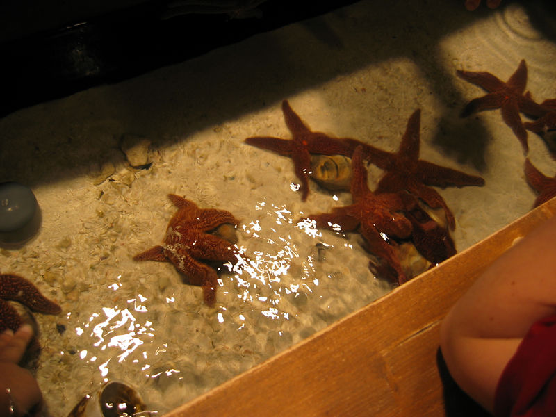 2006-03-01 41-georgia-aquarium-40
