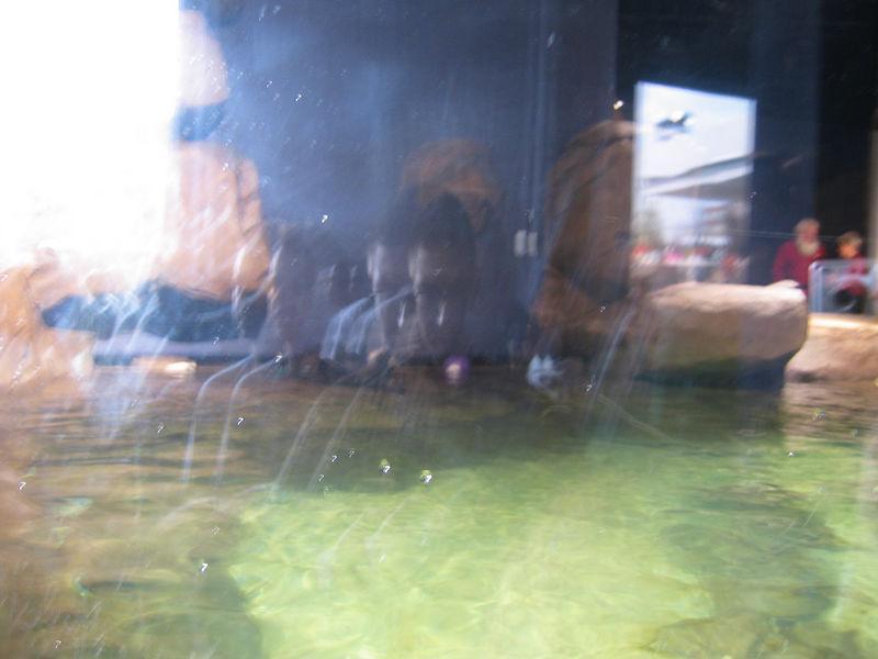 2006-03-01 17-georgia-aquarium-16