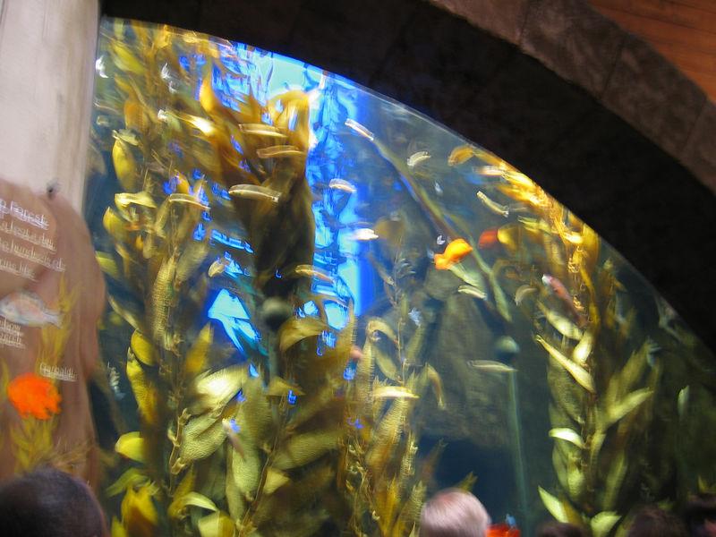 2006-03-01 04-georgia-aquarium-03