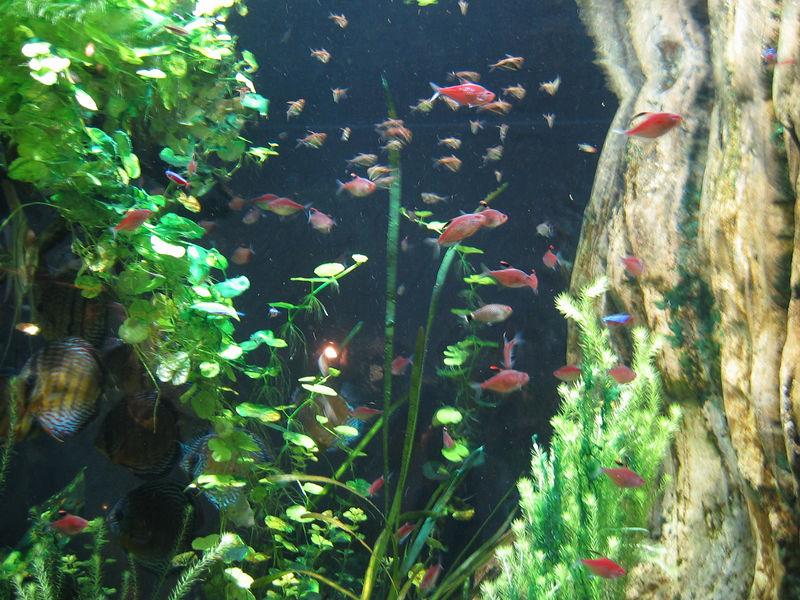 2006-03-01 47-georgia-aquarium-46