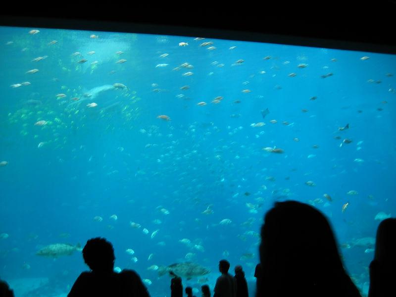 2006-03-01 29-georgia-aquarium-28