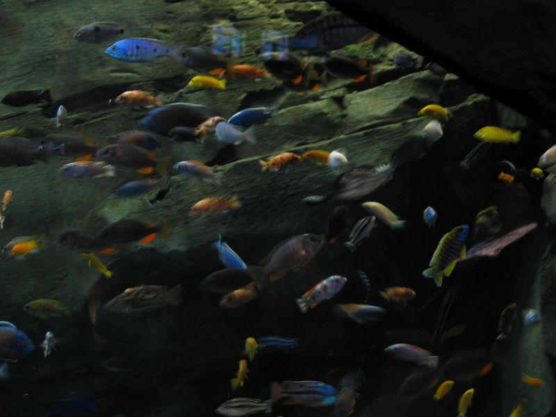 2006-03-01 45-georgia-aquarium-44