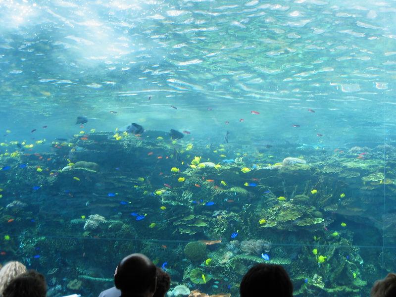 2006-03-01 37-georgia-aquarium-36