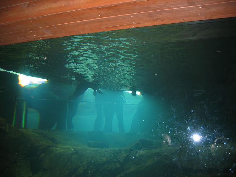2006-03-01 12-georgia-aquarium-11