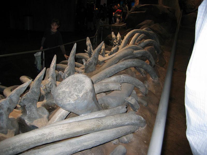 2006-03-01 13-georgia-aquarium-12
