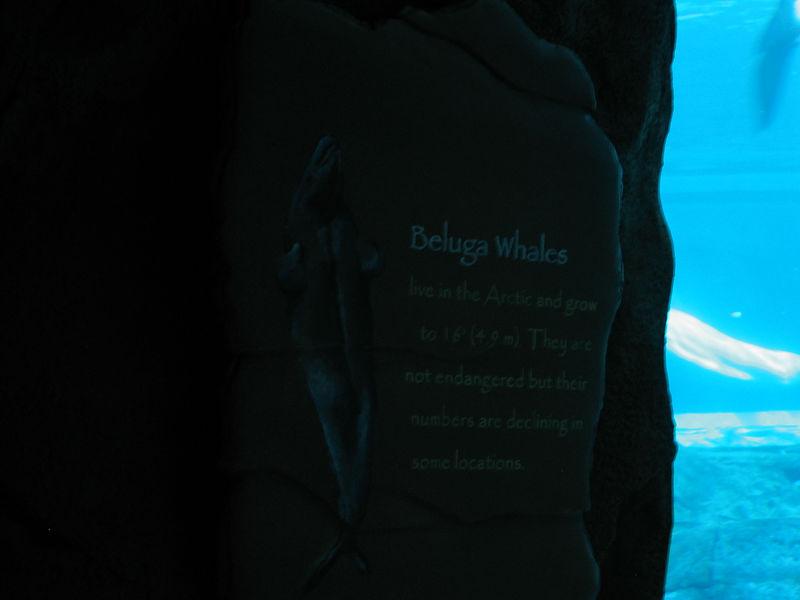 2006-03-01 09-georgia-aquarium-08