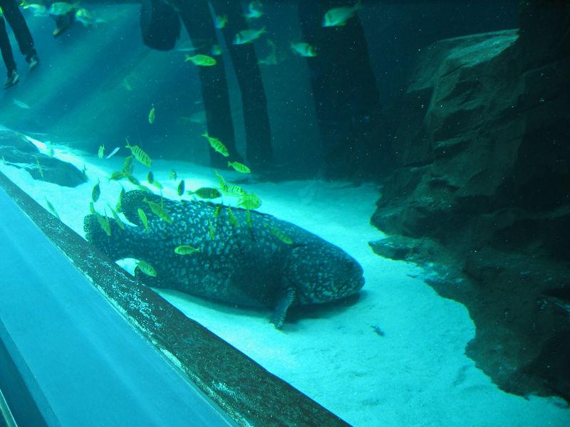 2006-03-01 23-georgia-aquarium-22