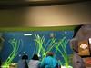 2006-03-01 14-georgia-aquarium-13