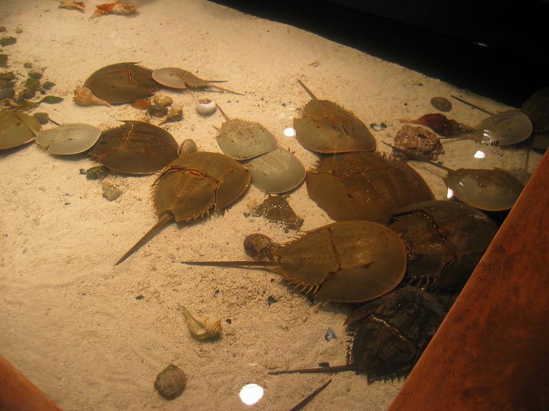 2006-03-01 39-georgia-aquarium-38