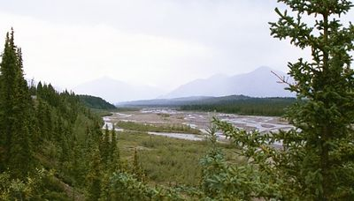 The Teklanika River in Denali Nat'l Park, like many in Alaska, is a braided river which fills only a small portion of the gravelly streambed.