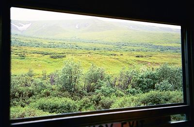 Just one of the ever chaning views out the bus window as we bounce along the Denali Park road.
