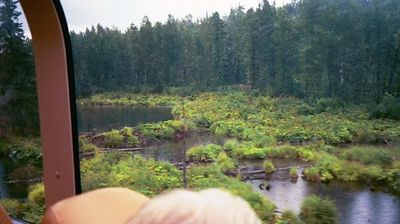 Beaver ponds among the smallish pines. These trees don't grow very tall or large due to the permafrost conditions.