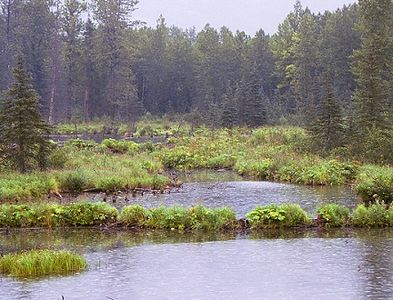 "A light rain (""liquid sunshine"") falling as we pass a few beaver ponds."