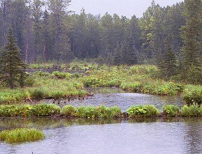 "A light rain (""liquid sunshine"") falling as we pass a few beaver ponds."