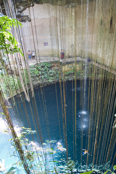 The cenote is a collapsed cave that has formed as a result erosion of the limestone.  Some of the cenotes are connected to the ocean by a labyrinth of underground caves or rivers.  You can see ground water cascading into the cenote.  In some of the cenotes the water turnover is quite rapid.
